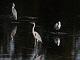 11月25日・土練習88回目 南港野鳥園