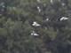12月7日(月)  練習9 水鳥