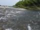 6月25日(木)  滋賀県安曇川
