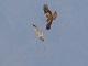12月26日・火練習99回目 南港野鳥園