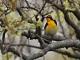 4月21日(金)練習57回目 南港野鳥園