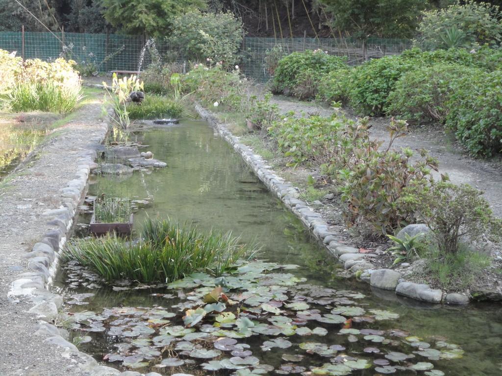 メダカのいる池