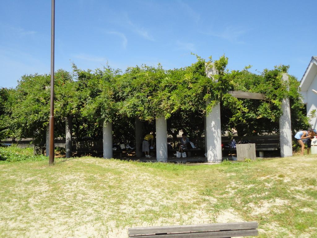 藤棚の木蔭