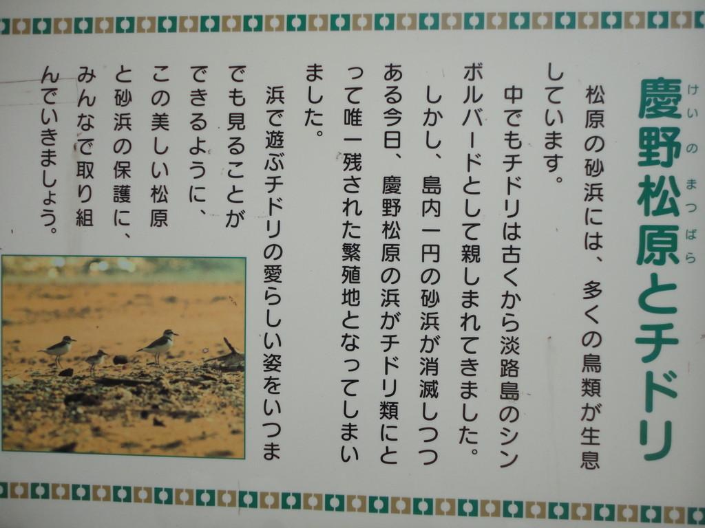 チドリの繁殖地の説明