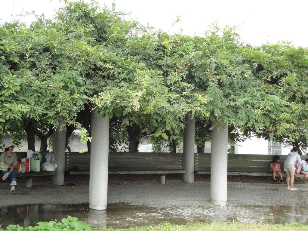 ふじ棚の木陰