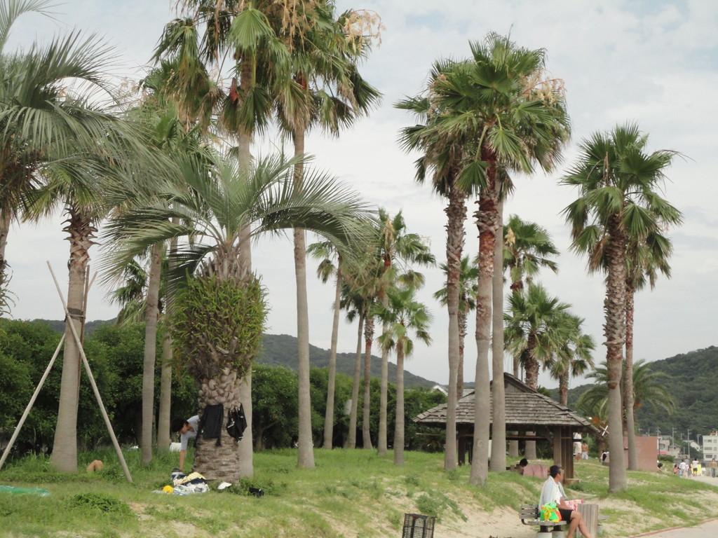 熱帯ムードのヤシ並木