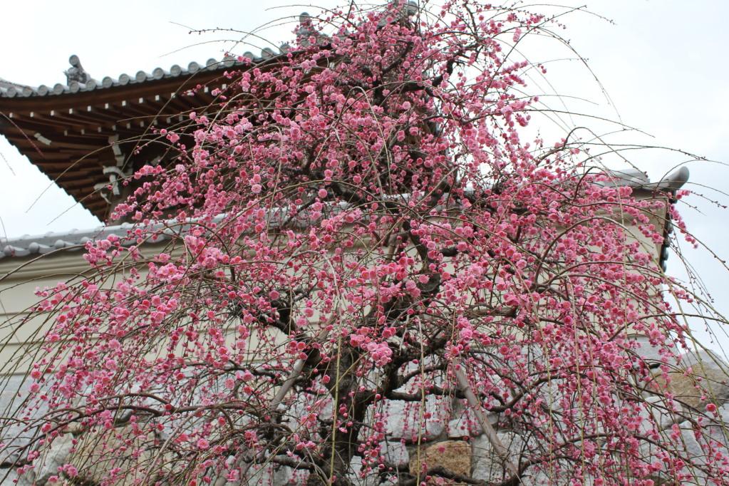 広田・大宮寺