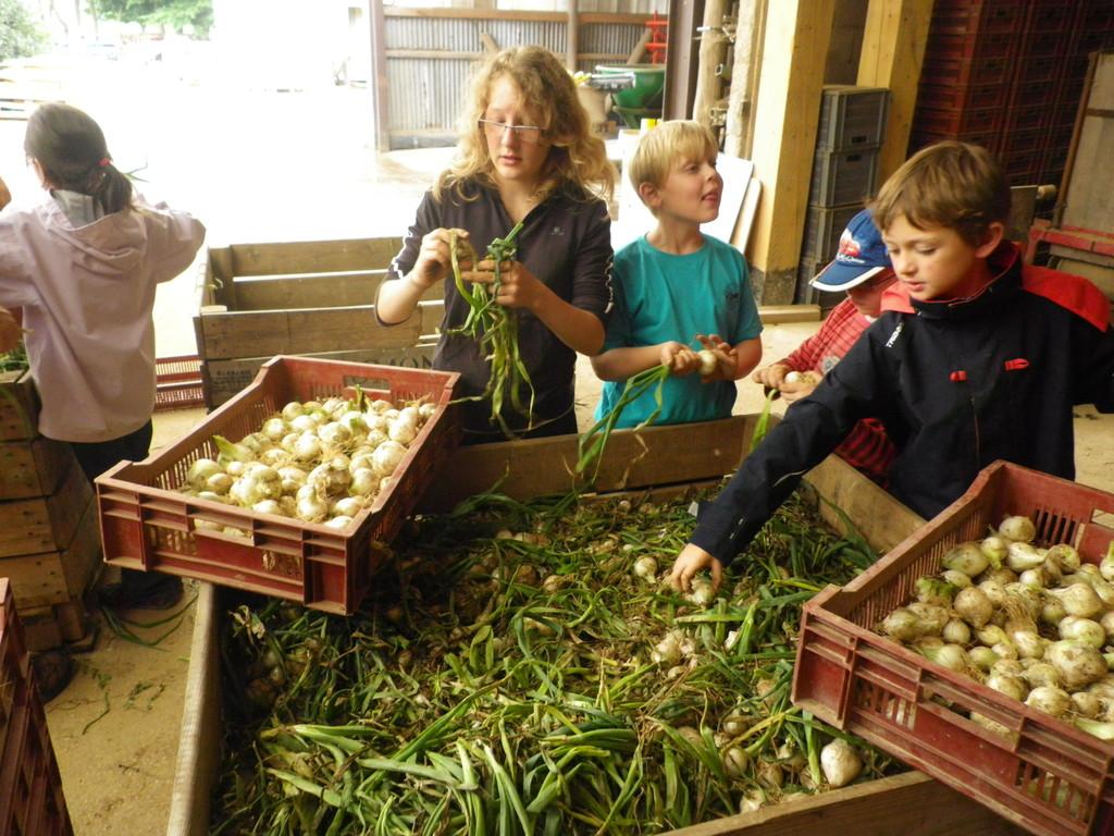 préparation des oignons