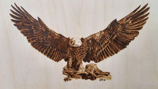 Dieser wunderschöne Adler hat sein neues Zuhause in Albanien gefunden.