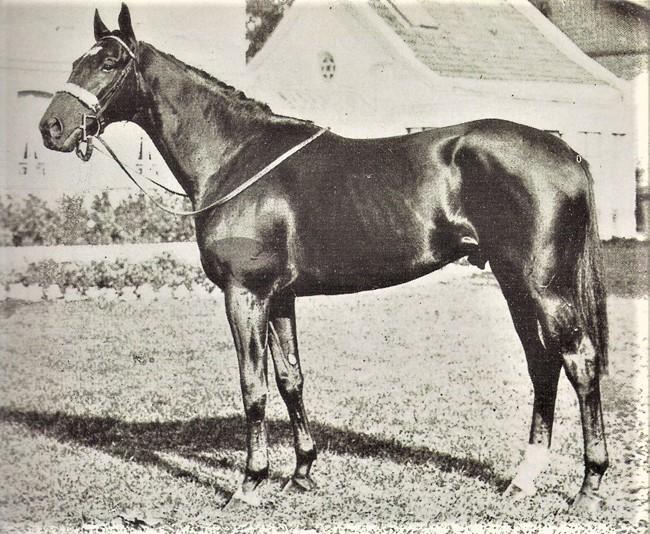 Nuccio, propriété du prince Aga Khan par Alec, gagne en 1952 le Prix de l'Arc de Triomphe et la Coronation Cup à Epsom
