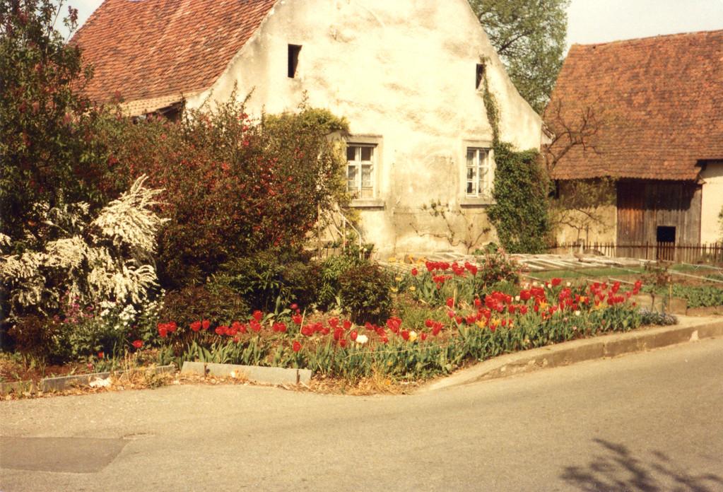 Untere Mühle, Gärtnerei Blaser, 1974