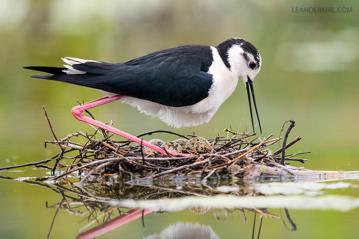 Drei Online-Vogelexkursionen
