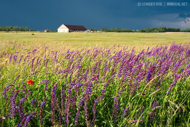 May thunderstorm at Lange Lacke