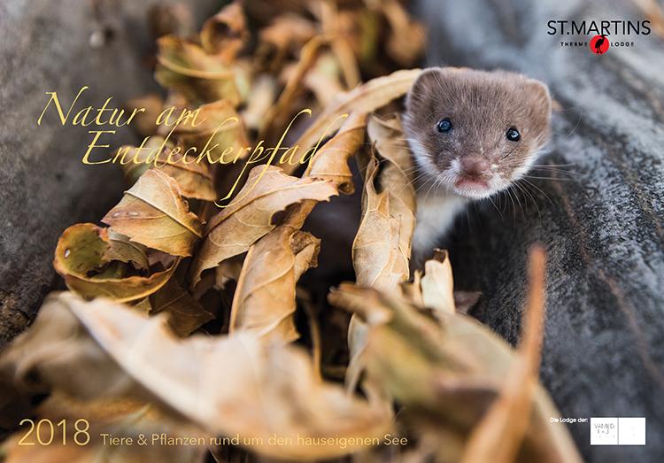Titelbild: Mauswiesel / Least Weasel