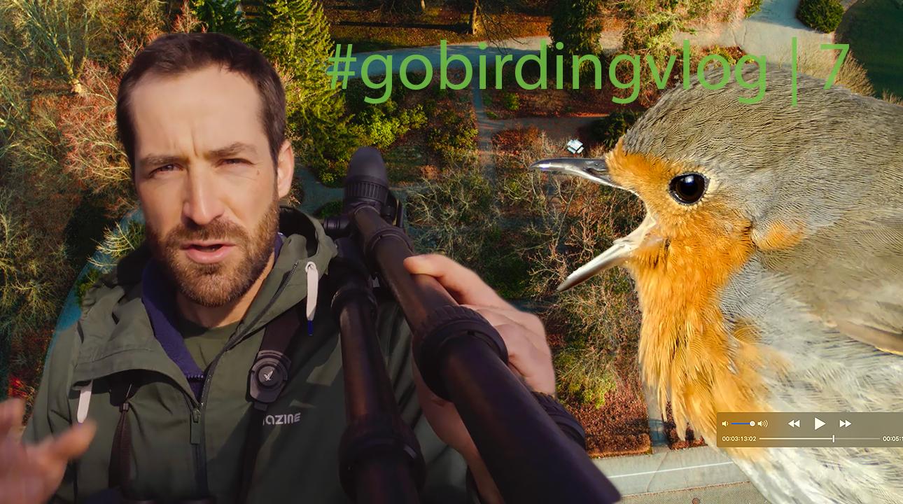 Neue Episode: #gobirdingvlog7