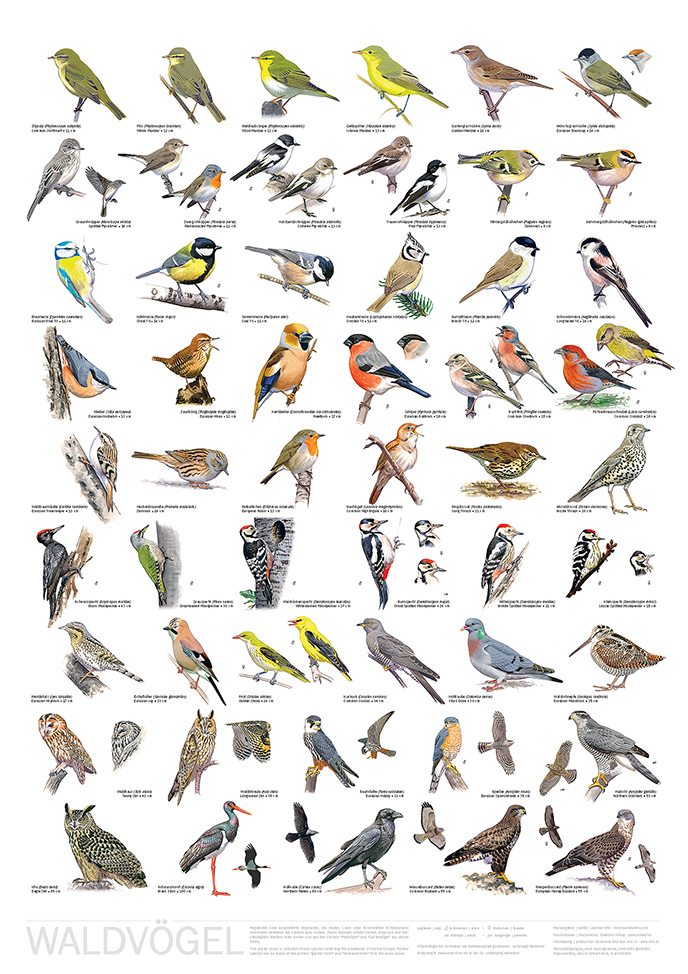 Poster Waldvögel