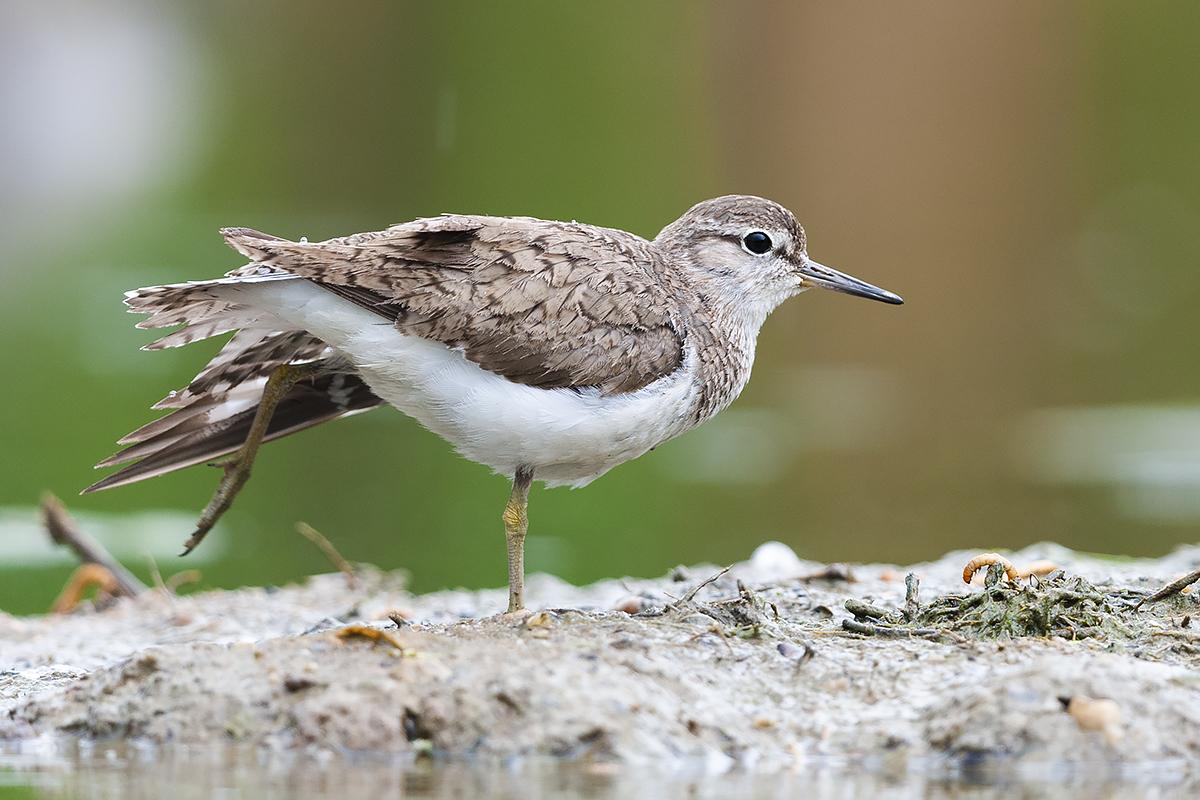Live Webinar | Schutzbedürftige Brutvögel der Steiermark