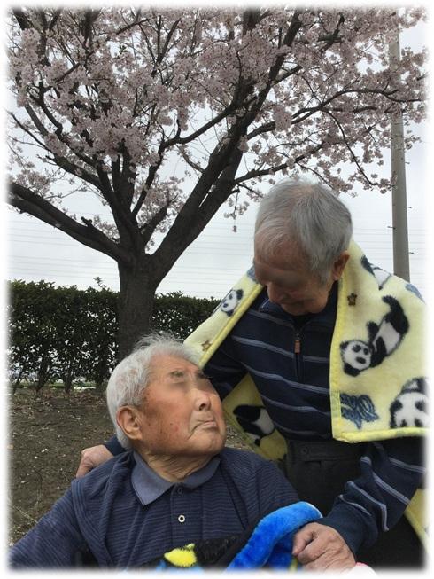 『桜が綺麗ね~』