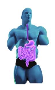 Morbus Crohn Darstellung: gesamter Verdauungstrakt