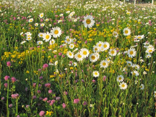 Blühwiese von Birgit Helbig, www.natur-garten-helbig.de