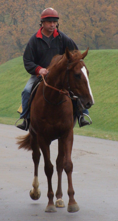 Durban Thunder nach einem Trainingsgalopp in Bremen-Mahndorf im November 2008