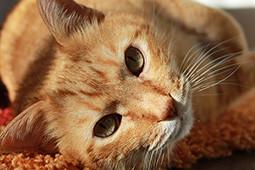 Aufwendung für Haustier | jgp.de