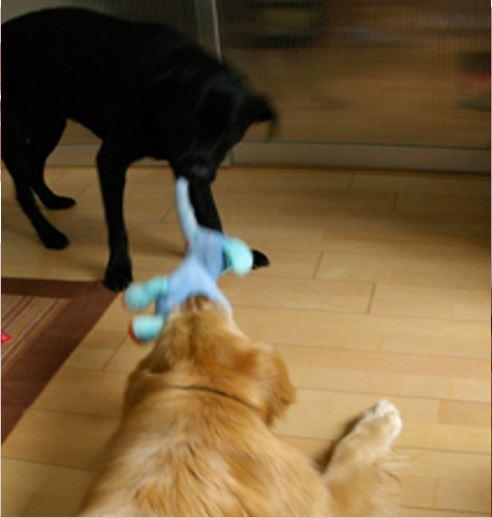 室内飼育のペットには滑らない床への対策が必要です