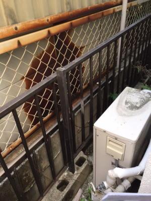 エコジョーズからの湯気で腐食したサイディング壁とアルミサッシ