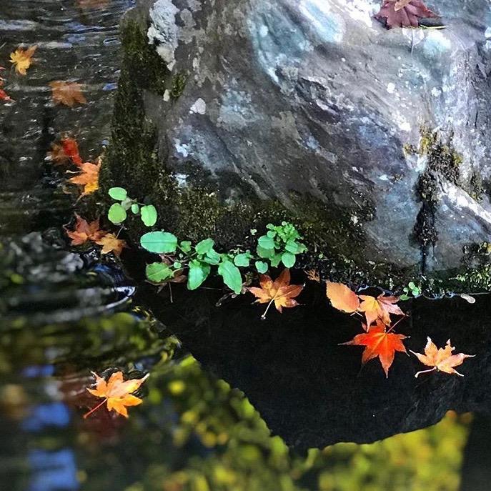 京都市下京区四条烏丸の心療内科、メンタルクリニック