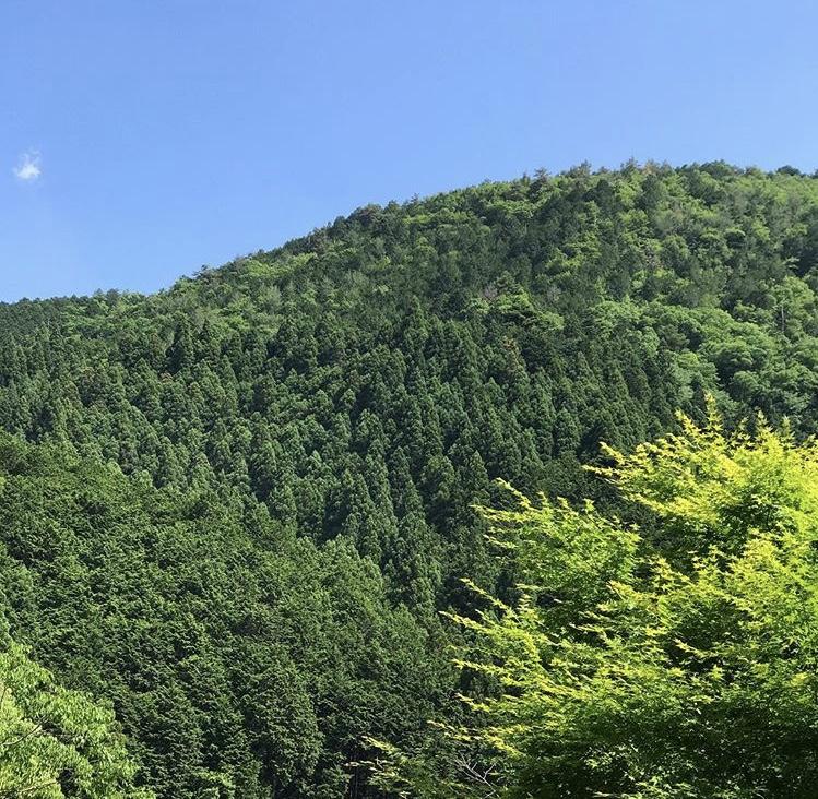 京都市下京区にある心療内科、女医のいるメンタルクリニック、鞍馬の山、美しい緑