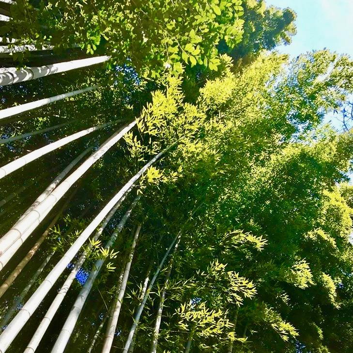 京都市下京区四条烏丸の心療内科、メンタルクリニック、嵯峨野の竹林