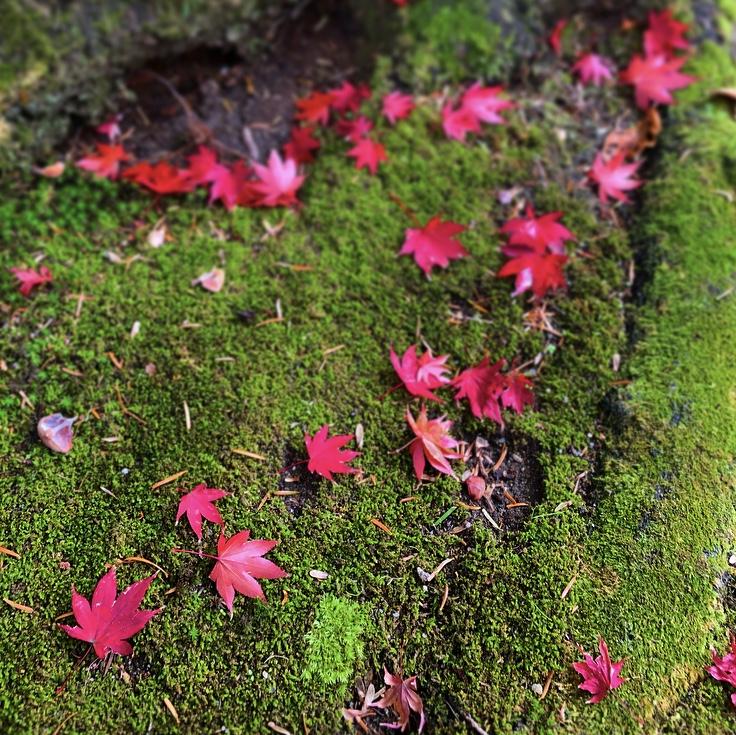 京都市下京区の心療内科、女医のいるメンタルクリニック、緑の苔、赤く色づいたもみじ
