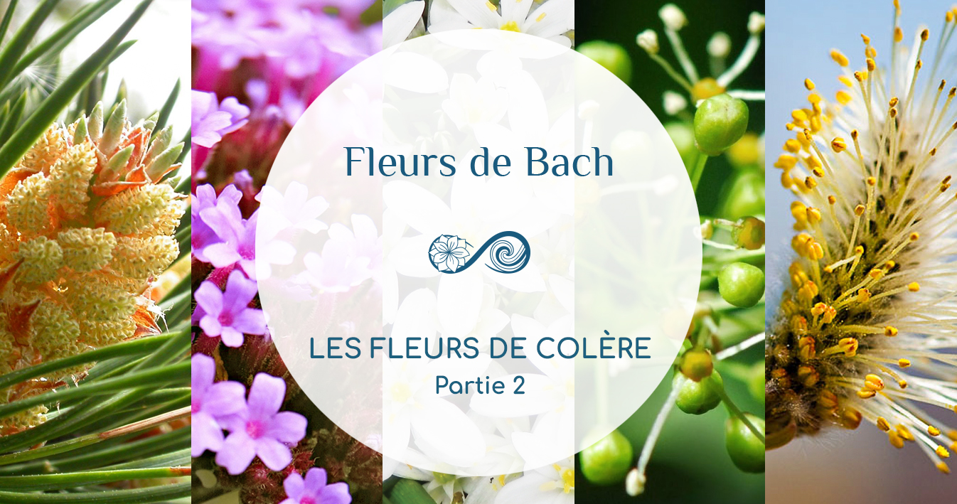 En COLÈRE ? Quelle Fleur de Bach pour vous aider ? Partie 2