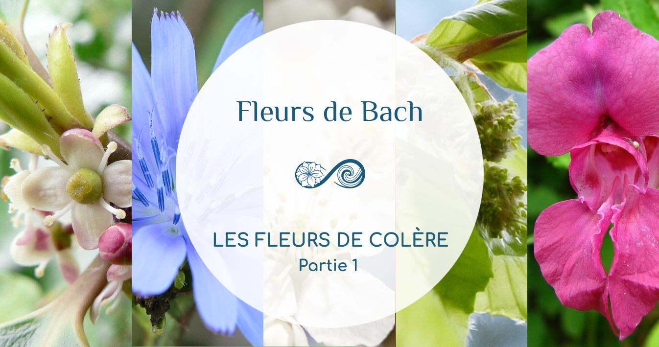 En COLÈRE ? Quelle Fleur de Bach pour vous aider ? Partie 1