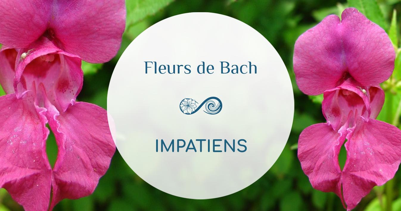 Une Fleur dont le nom parle de lui-même : L'IMPATIENS, Impatience, Impatiens glandulifera