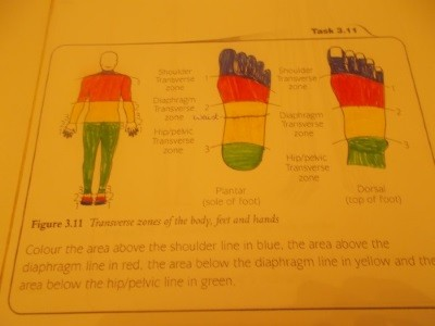 TRANSVERSE ZONES ON BODY & FEET & HANDS