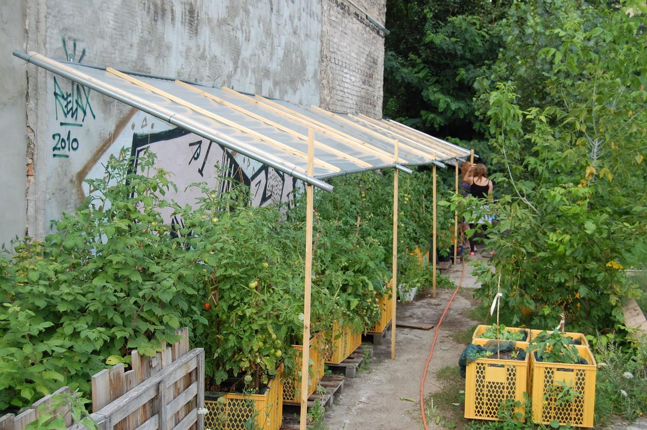 Tomatendach - Schutz vor zu viel Regen