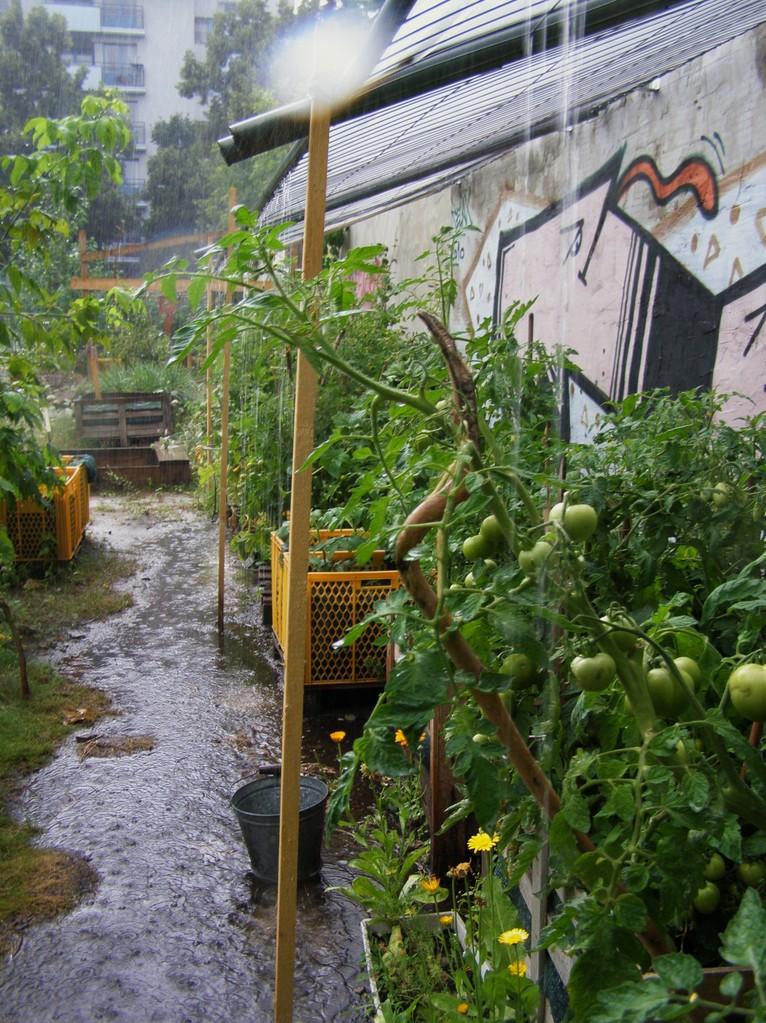 Heftiger Regenguss - das Dach hält