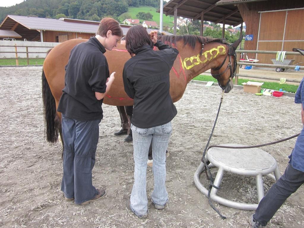 Immer wieder stecken die Teilnehmerinnen die Köpfe zusammen, um den erhaltenen Auftrag genau anzuschauen und danach auf dem Pferd umzusetzen.