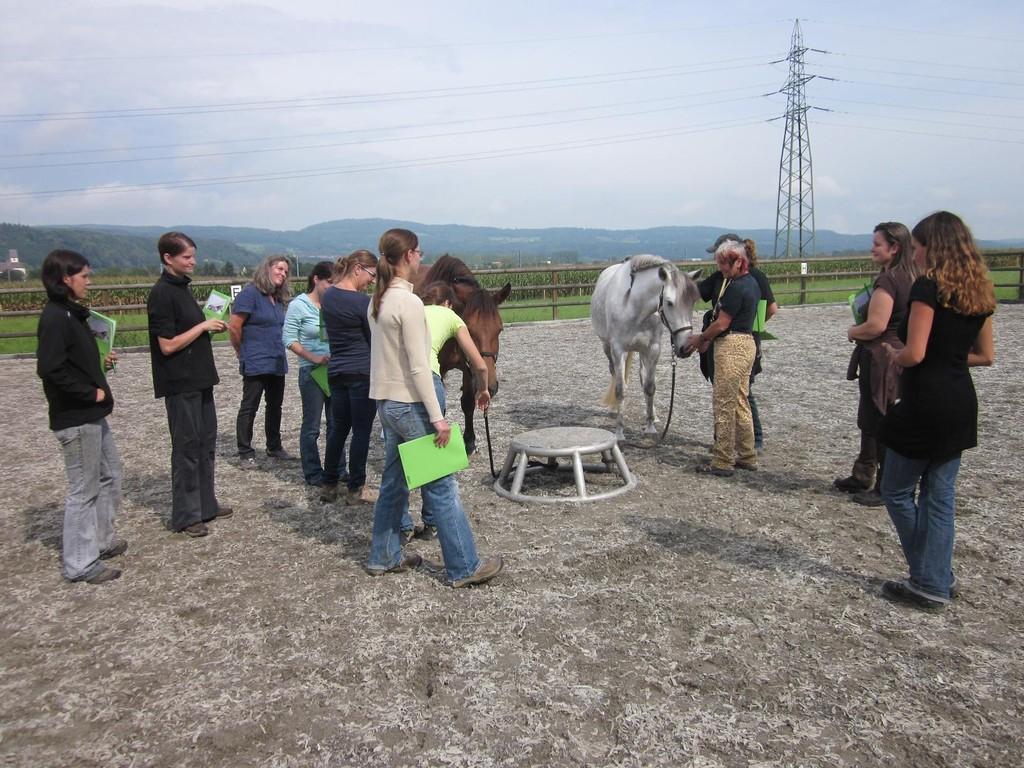 Bevor wir mit den gestalterischen Arbeiten an den Pferden beginnen, sollen sich alle mit den beiden Pferden Ljuba und Balandra bekannt machen.