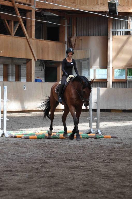 Nach einem Reiterwechsel folgt etwas Stangenarbeit als Vorbereitung auf einige Sprünge.
