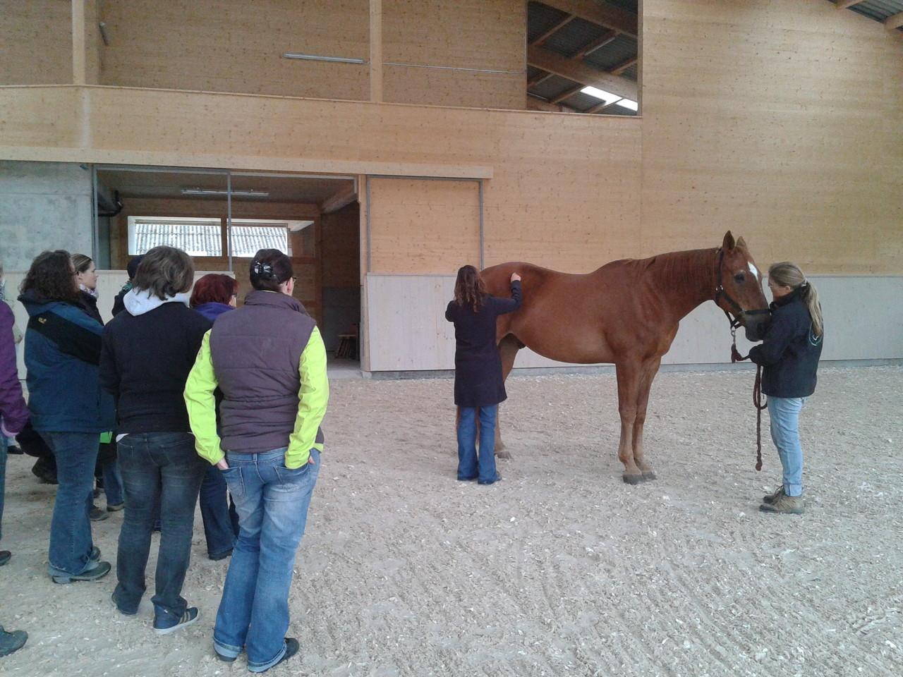 Bei zwei verschiedenen Pferden (Traber und Warmblut) wurde das Gebäude im Stand beurteilt und das Gangbild angeschaut, dabei ging Nadine auch auf rassenspezifische Besonderheiten ein.