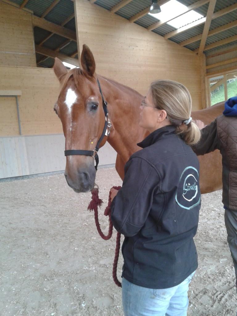 Wir danken Stinah und insbesondere den Pferden ganz herzlich für die Ermöglichung dieses Seminars.