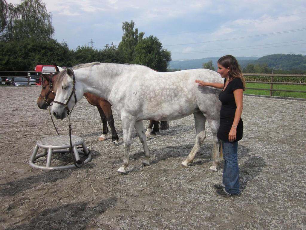 Direkt am Pferd lässt es sich nach wie vor am Besten erklären.