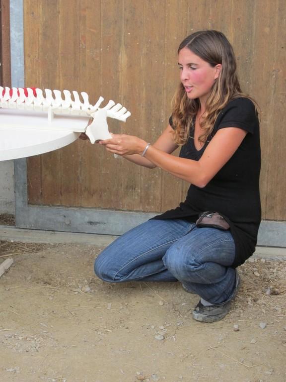 Nadine demonstriert, dass das Ilio-Sakral-Gelenk (ISG) für die Schubübertragung der Hinterhand auf die Wirbelsäule des Pferdes verantwortlich ist.