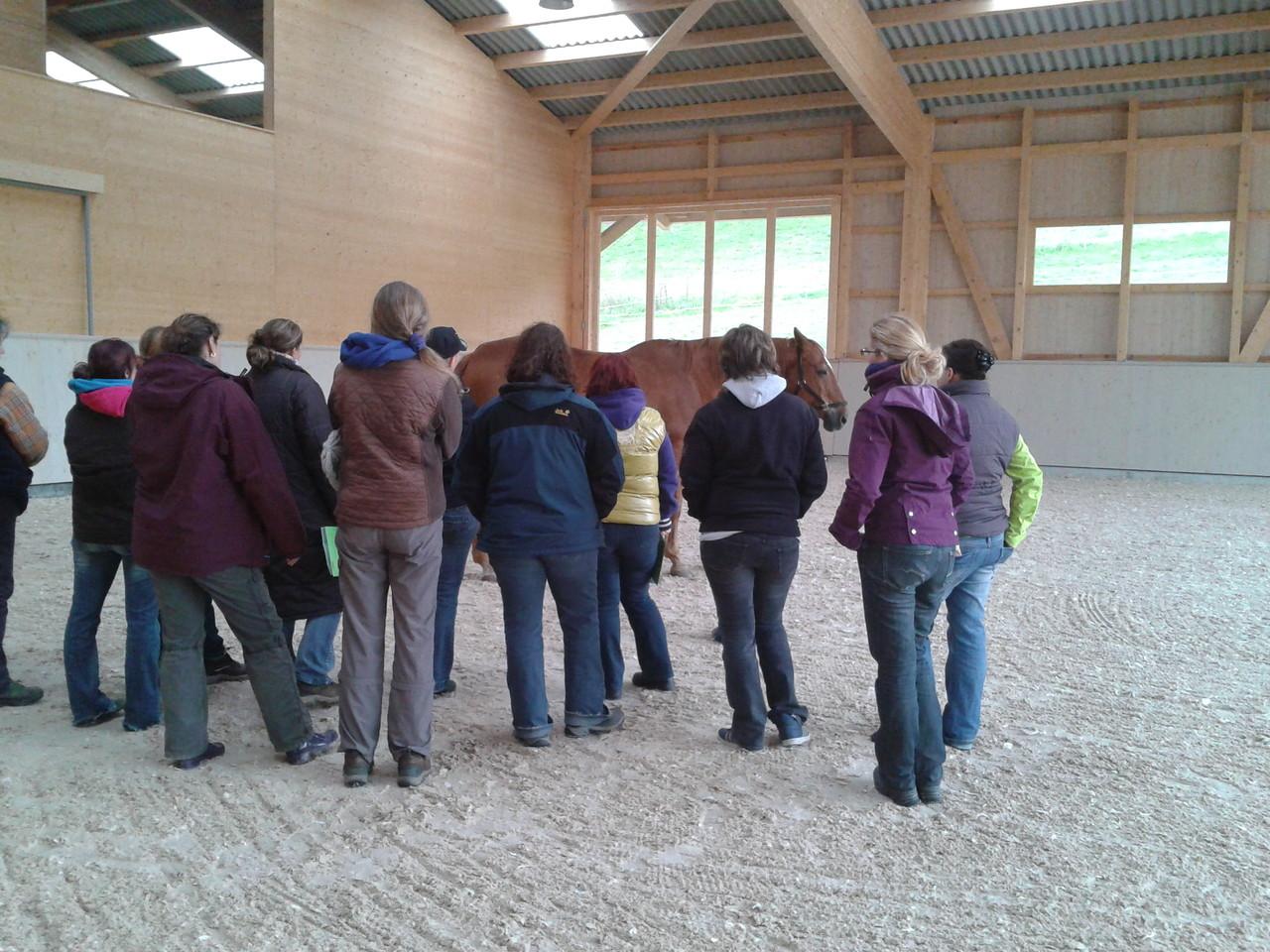 Nach einer kurzen Mittagspause mit feiner Pasta, ging es in die Reithalle zur osteopathischen Pferdebeurteilung und Ganganalyse, die gelernte Theorie vom Morgen konnte nun direkt an den Pferden umgesetzt werden.