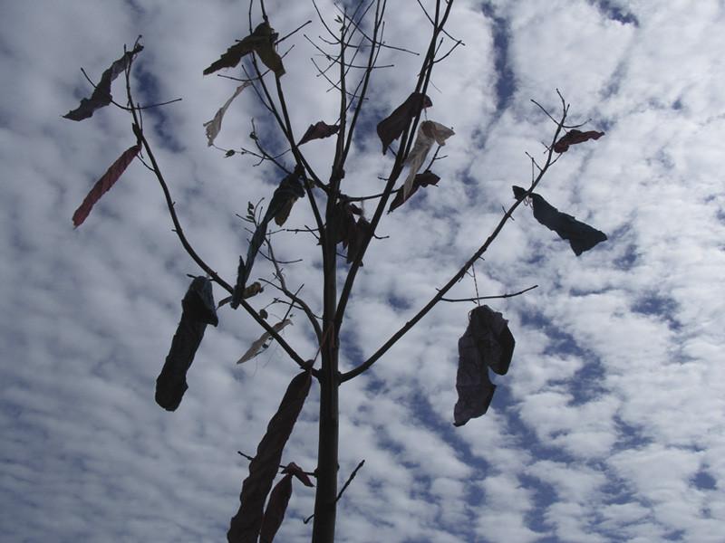 Wünschebaum