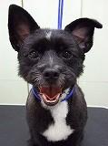 東京ラブリー動物病院の飼い犬ピタゴラスの紹介画像です