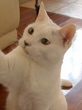 練馬区/東京ラブリー動物病院の飼い猫イワナの紹介画像です