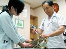 腎臓が悪く脱水症状が出ている猫に皮下点滴をしているところです。老齢の猫は特に腎臓が悪くなりやすいので注意が必要です。